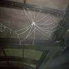 クモの巣面白いw