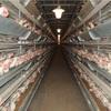 安価な卵の裏側と、安全な卵の選び方