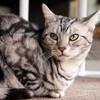 スクレイピング初心者がpythonでかわいい猫ちゃん画像をコマンド一発でネットから収集してみた