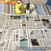 島根県の新聞流通考察