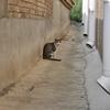 野良猫の襲撃