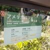 上野動物園のアメリカバク