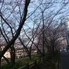 桜が開花し始めましたね。春を感じてきたので、桜が満開の場所を探してどこかに出かけたいと思います。