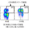 凄すぎる研究に驚く『110歳以上の超長寿者が持つ特殊なT細胞-スーパーセンチナリアンの免疫細胞を1細胞レベルで解析-』理化学研究所 慶應義塾大学医学部 2019年11月13日。