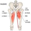 股関節内転筋群は骨盤を安定させる!足パカで鍛えてストレッチしよう:効果的な筋トレとストレッチ