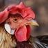 【禅語】 木鶏子夜に鳴く ~本物の強さとは何か~