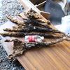 山芋収穫記念!お裾分け抽選会