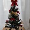 クリスマスツリーがきたーっ!!