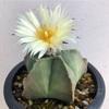 ついにヘキランさんが開花‼︎ 【5月26日追記あり】