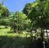皇帝ダリアの支えは石八前広場に切ってあった竹♪