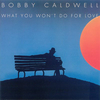 Bobby Caldwell - What You Won't for Love:イヴニング・スキャンダル -