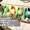 【ギフト向け】おしゃれ和菓子「白鷺宝(はくろほう)」が可愛すぎた【9種類レポート】