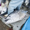 2018年3月31日 小浜漁港 お魚情報