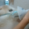 ネブライザー治療と慢性気管支炎