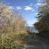 春の函館山(千畳敷方面)