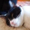 今日の黒猫モモ&白黒猫ナナの動画ー680
