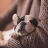 官足法の足もみで熟睡