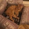 保護猫子猫ちゃんら正式譲渡の日
