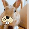 【ミニウサギのサスケ先輩】うさぎと飼い主のハロウィンは大パニック!?