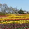 世羅高原農場の花畑風景 NO,6(広島県世羅町)