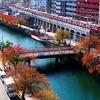京急 大岡川の桜紅葉