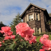 納めの秋薔薇と奔りの紅葉と(東京・旧古河庭園)