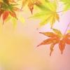 【慶應通信&その他】京大式カードで文献整理&R.マクドナルド
