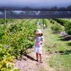 【メルボルンでブルーベリー狩り♡】メルボルンから1時間20分、大粒で新鮮なブルーベリー狩りが出来るTuckerberry Hill Farm