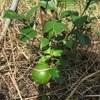 【畑】植物たちとのかかわり方、今日も探求中!