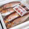 2020年3月2日 小浜漁港 お魚情報