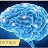脳解剖の図を英語で! -神経・動脈・脳室など-
