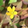 2018年10月の観察記録(植物)