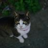 【猫島】田代島への仙台駅からのアクセス方法【攻略】