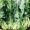 Chapter 3: 毎日食べたいグリーン野菜とそのヘルスベネフィット
