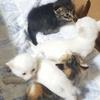 仔猫たちの里親を募集しています(//∇//)ノシ(ΦωΦ)✨