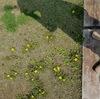 春と庭の黄色い花 月曜日