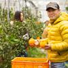 生産者に会いに行く旅 ~鹿児島県長島町「しゃべらない木と会話する」デコポン農家、山上農園~