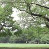 草の上で楽器練習・コンサート