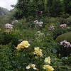 夏のバラの庭 Rose garden