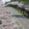 Go to ~ 近所の桜