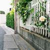 近所の花、撮り散らかし。