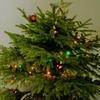 ☆ クリスマス おめでとう ☆