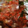 清水寺周辺で写した紅葉