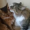 たまに喧嘩もするけれど、二匹の猫を迎えてよかった