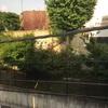 上野の観光をしてみる。鷗外荘に泊まるのはこれが最後。