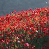 誕生花365カレンダー【誕生花を求めて】花の種類が多くて!