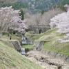 池田町の霞間ケ渓の桜。ライトアップも必見。