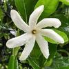 アフプアア ahupua'a(ハワイの土地区分)