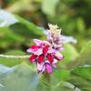 かわいそうな花と偏屈な花・・・