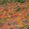2016年10月10日~11日に、栃木県の那須茶臼岳に行ってきた時の写真です(見頃は現在「牛ヶ首」周辺のみ)。